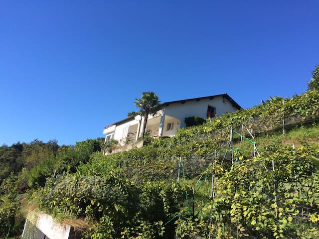 Tolle Wohnung mit wunderschönem Pool - Monteggio - Apartmen