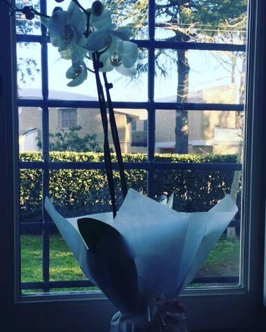 i fiori la mattina presto