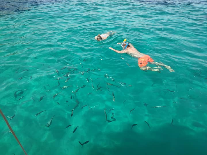 "Snorkel with ""vegetarian"" fish"