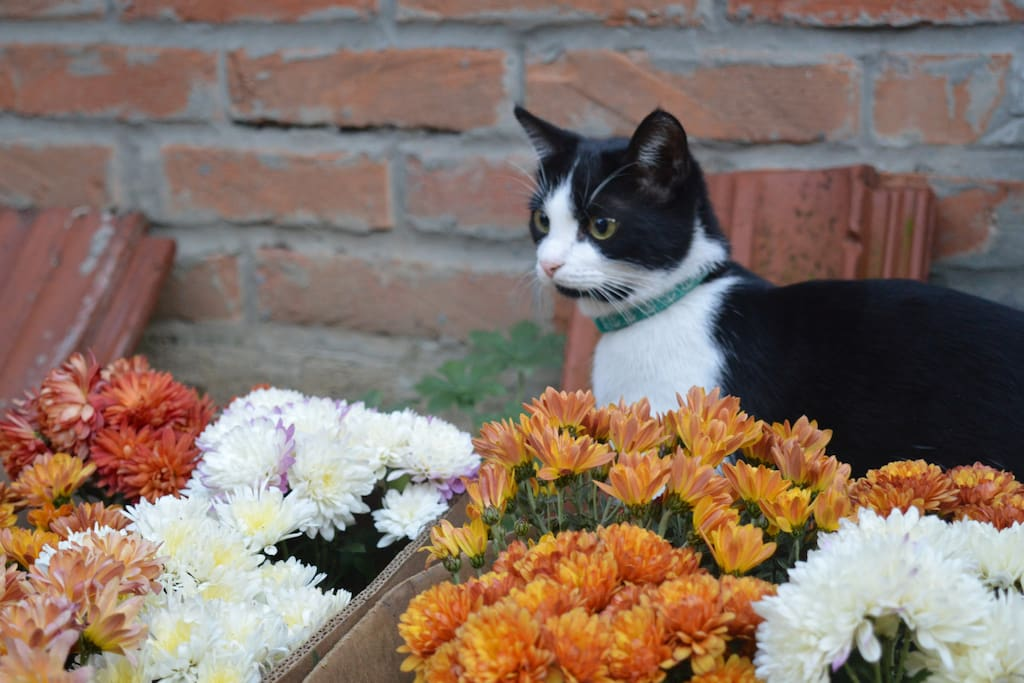 Our kitten Mia is quite a gardener! She's always happy to pick and destroy flowers!