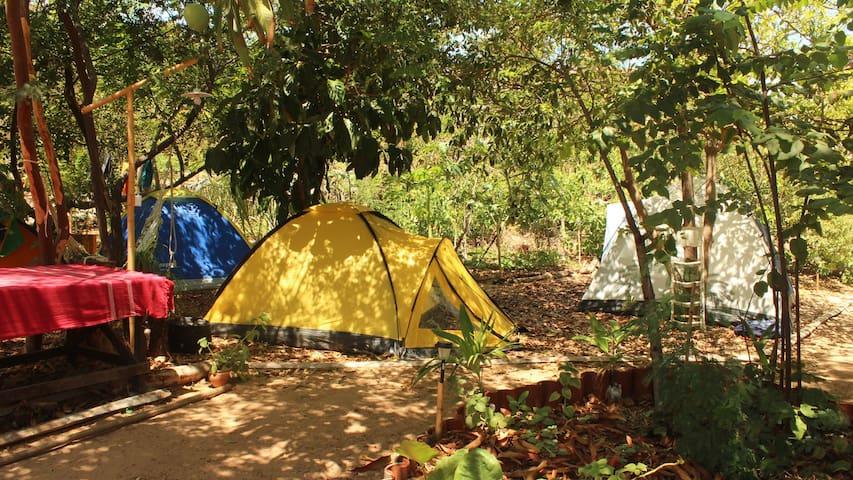Eco Camping Flor da Moringa - Aracati - Tent