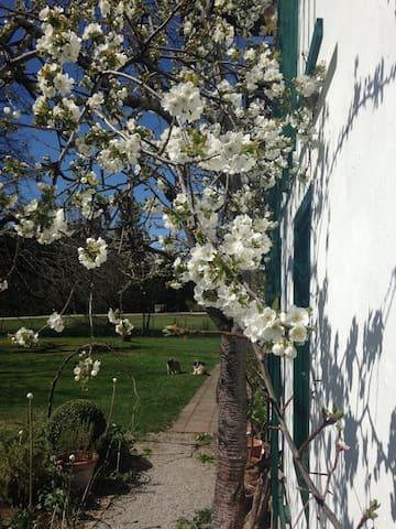 Schöne Unterkunft in Ruhelage - Bad Mitterndorf - Huis