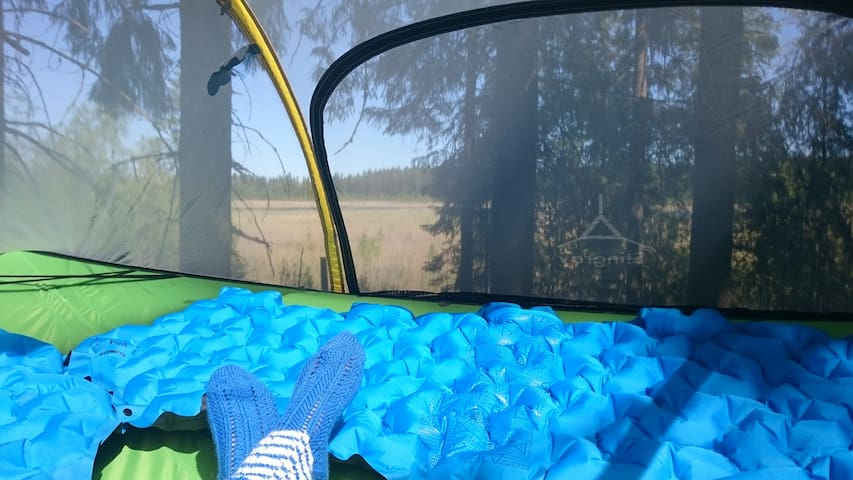 You have a restful bird lake scenery from the tree tent.