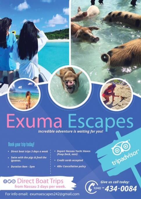 Let us arrange your Exuma escursion to swim with the Wild pigs!