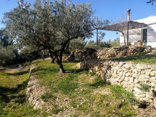 Eco-house, set in peaceful olive groves.