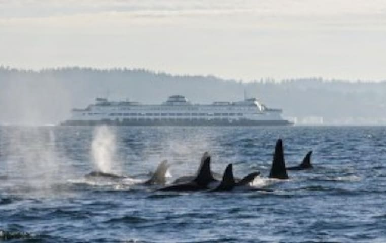 Whale watching. Ferry boats across to Seattle