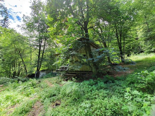 Waldhäuschen, Tiny House, Waldhütte, Waldhaus