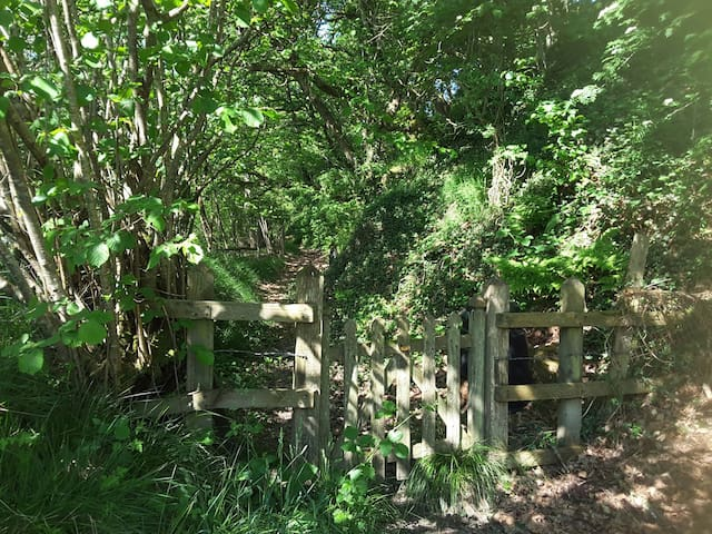 The gate to the wood