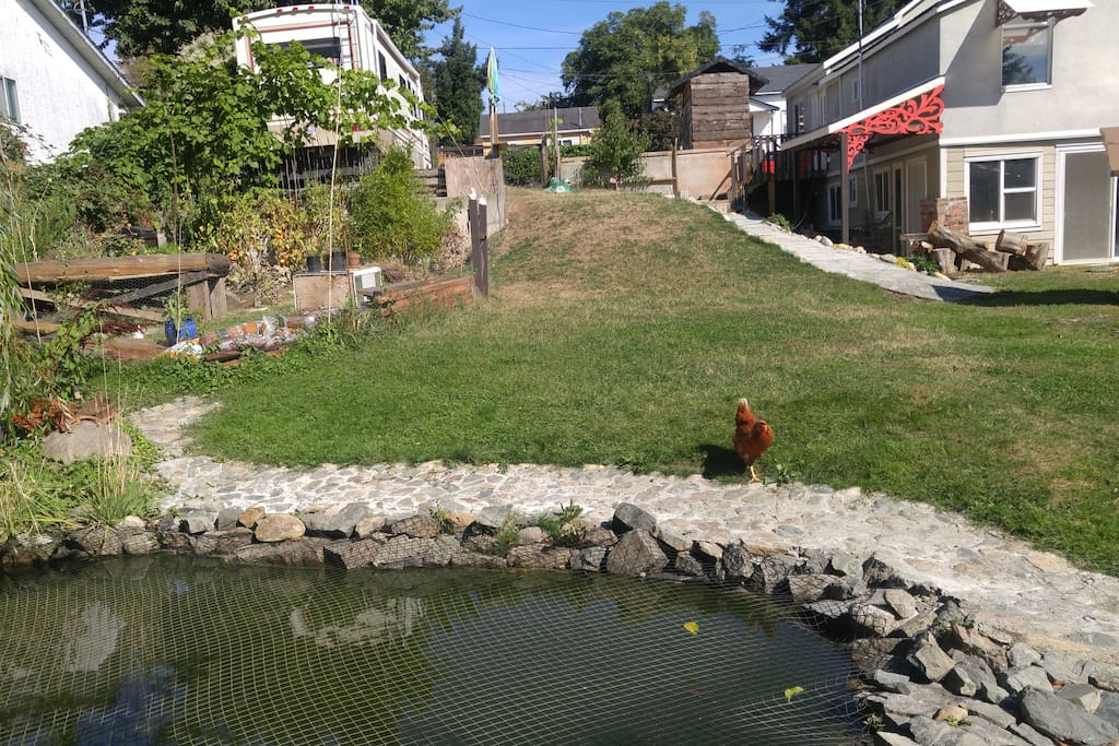 The view from our koi pond.