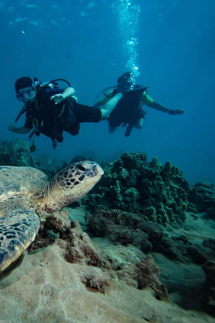Easy fun diving with lots of sea turtles