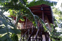 sigiriya charuka resort Tree House