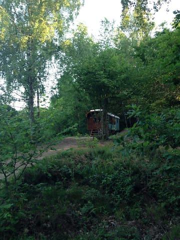 Ferien im Zigeunerwagen «Olga»