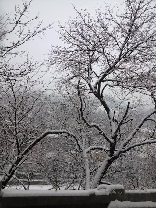 뒤뜰 산벚나무에 핀 눈꽃