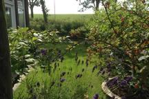 Tuin zuidzijde