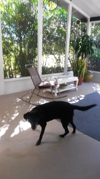 Screened porch but no dog anymore