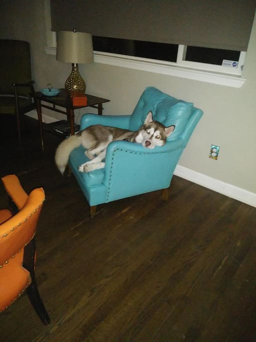 Another Furry Guest Enjoys Relaxing at El Cerrito Airbnb.