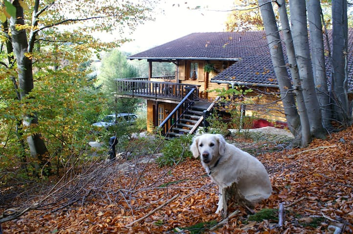 Holzhaus am Waldrand, Eifel - Wandern - FEWO