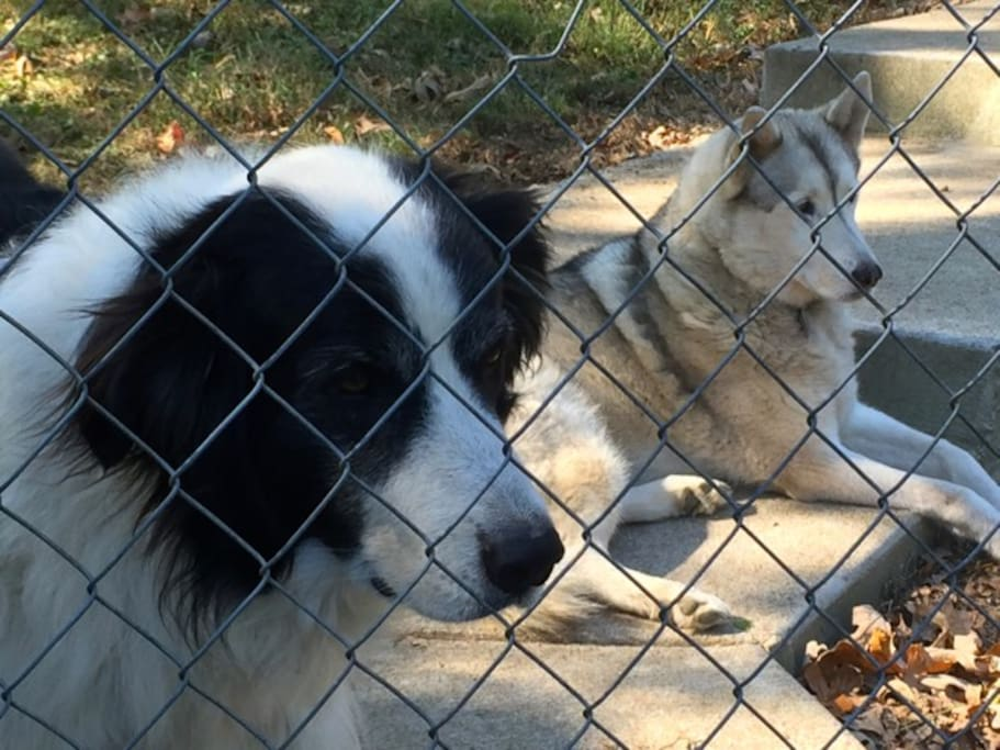 Delaney and Bonnie will greet you with wagging tails and if your lucky Bonnie will sing for you!