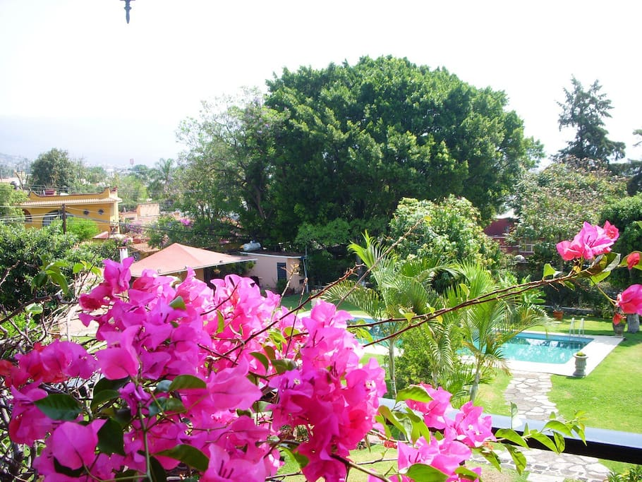 Vista de la piscina desde la terrazaAlberca y casa al fondo