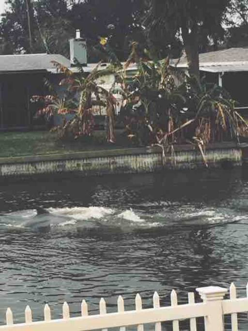 Dolphins playing in the backyard