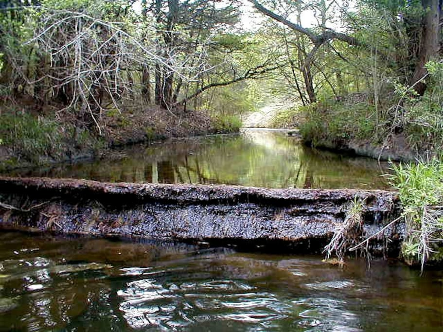 Our natural waterfall on a pretty creek was one of the things that intrigued us enough to buy the property