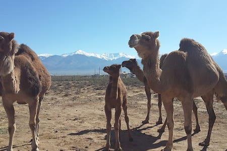 Camel-Air B&B - Moffat