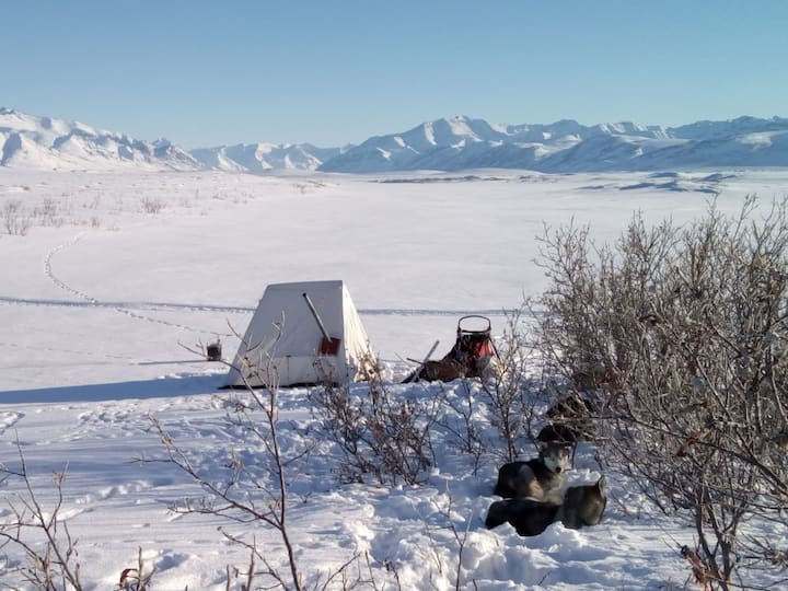 Camping with my dogs in the Arctic