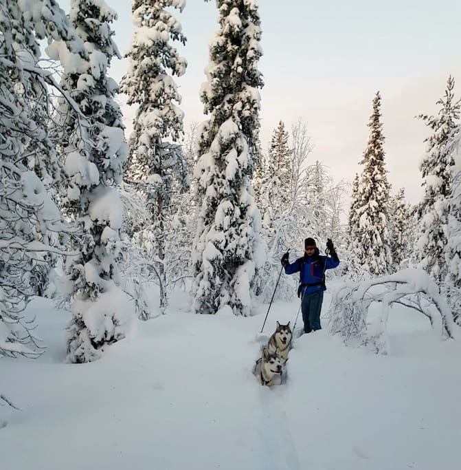 Per skiing in deep snow with the malamute girls
