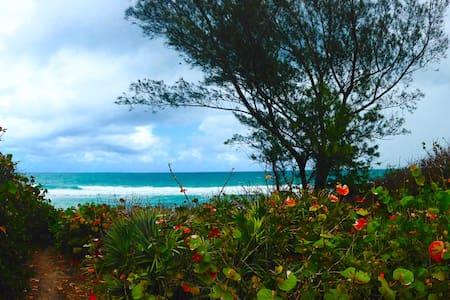 Petite oceanfront paradise cottage!