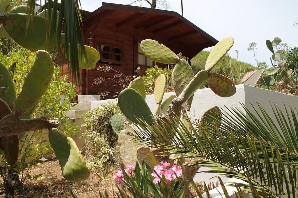 The Meditation Hut
