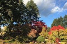 Side yard - fall colours