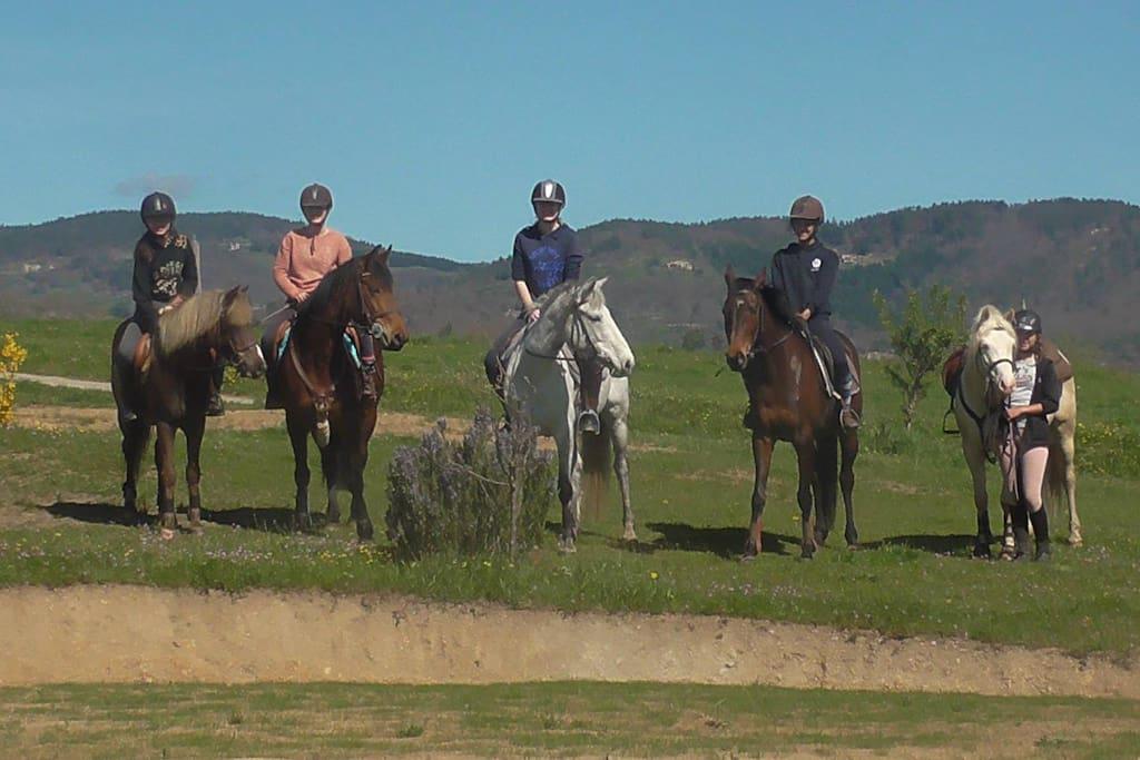 De la découverte au perfectionnement de l'équitation