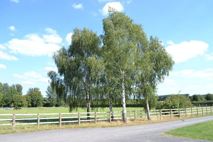 As an equestrian centre, you'll see many horses in our paddocks.