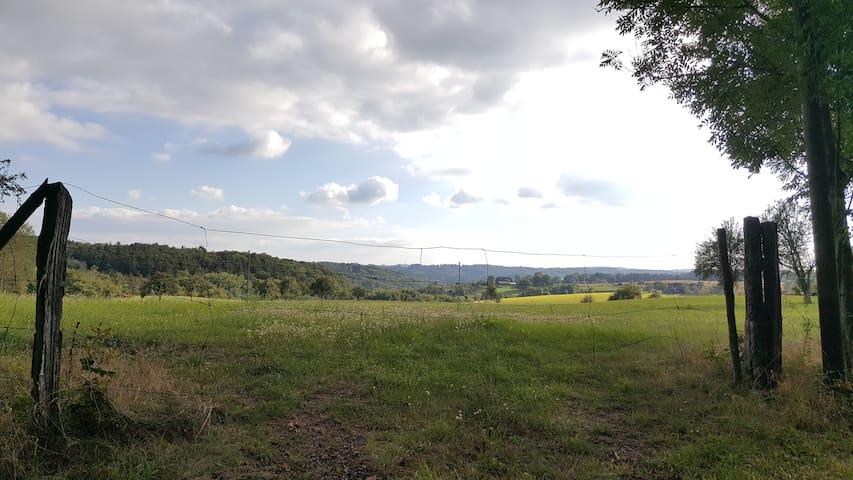 (R)Auszeit im Mainhardter Räuberwald