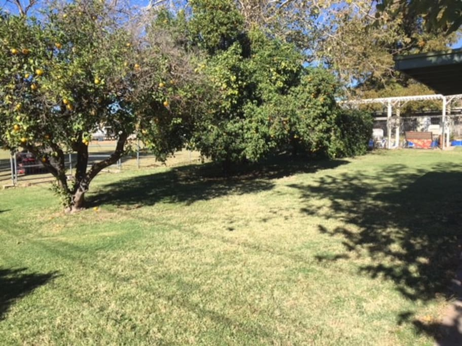 Large Fruit Trees In Back