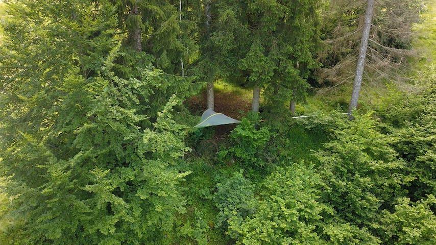 Baumzelten - den Baumwipfeln sehr nah