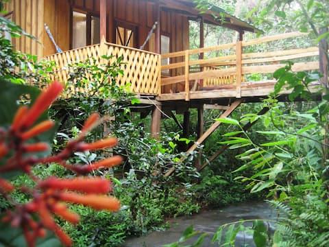 Reserva Yasí Yateré, cabaña en la selva