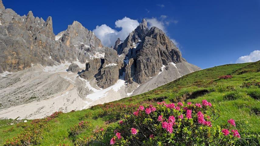 Appartamento Predazzo in Val di Fiemme - Predazzo - Byt