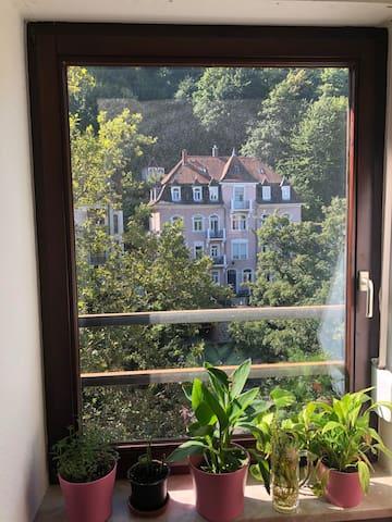 Schöne 3- Zimmer Wohnung in Heidelberg- Altstadt