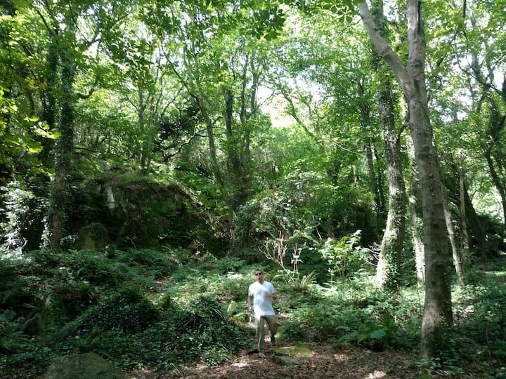 Hidden route through the woods