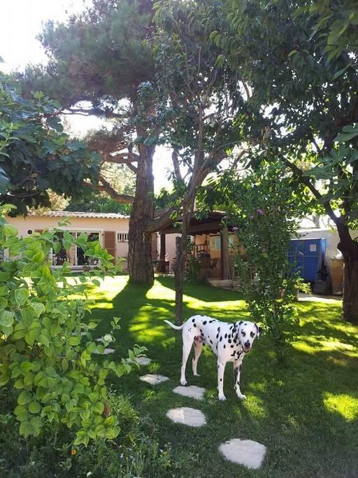 jolie maison avec jardin maisons louer aix en provence provence alpes c te d 39 azur france. Black Bedroom Furniture Sets. Home Design Ideas
