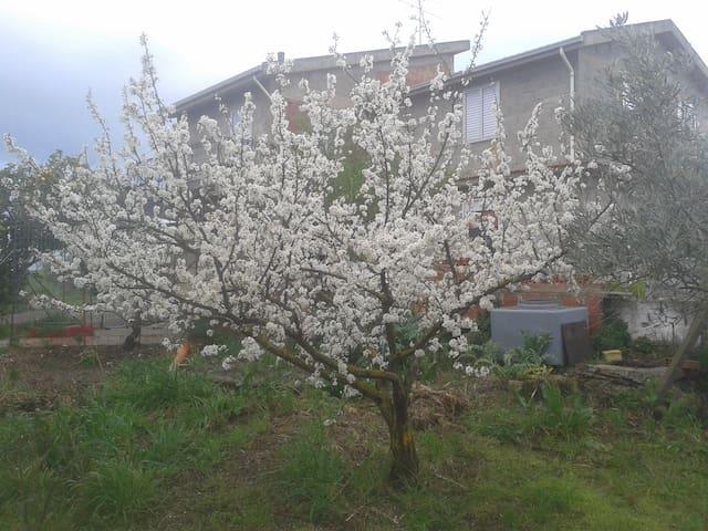 landhuis te huur - Villarosa - Hus