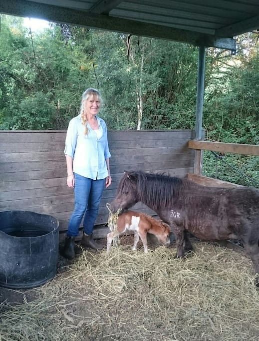 We have four friendly miniature ponies on Wishingwell Farm. Lucy was born 04/03/16 but we are expecting new foals in 2018.