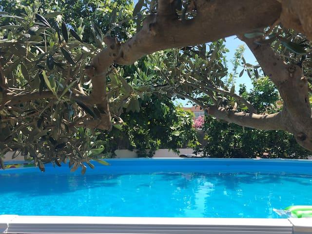 Vista dall'ulivo che offre alla piscina una zona d'ombra