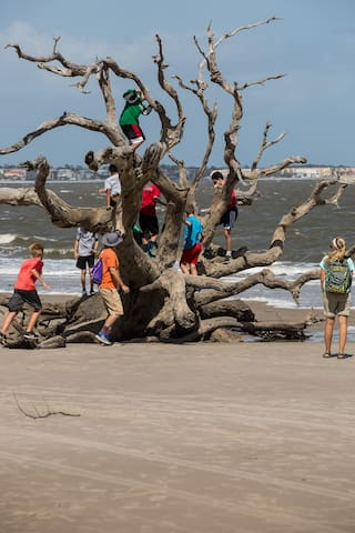 Jekyll's trees sprouting people
