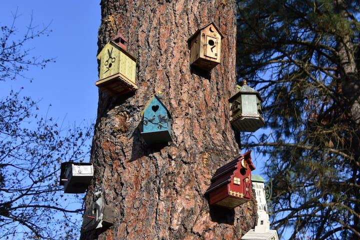 South Hill Birdhouse Bungalow