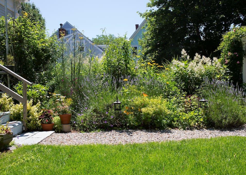 Garden in full summer bloom