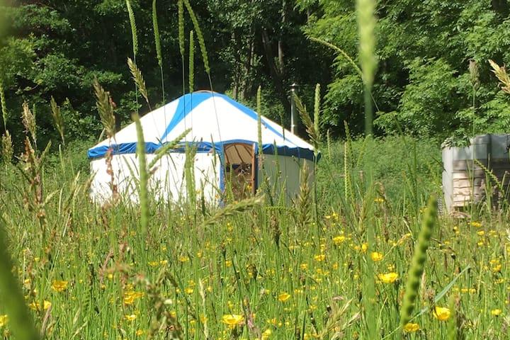 Ty Fechan - Little House - a yurt in a meadow