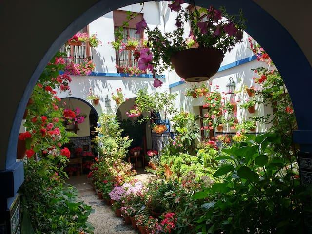 Private Room in Casa Patio