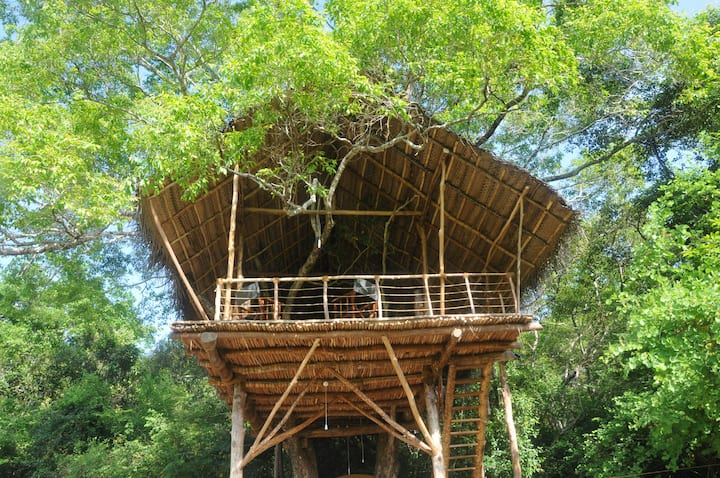 Get Wild! Rustic Jungle Tree House near Sigiriya